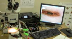 Observing southern pine beetle behavior under acoustic treatments